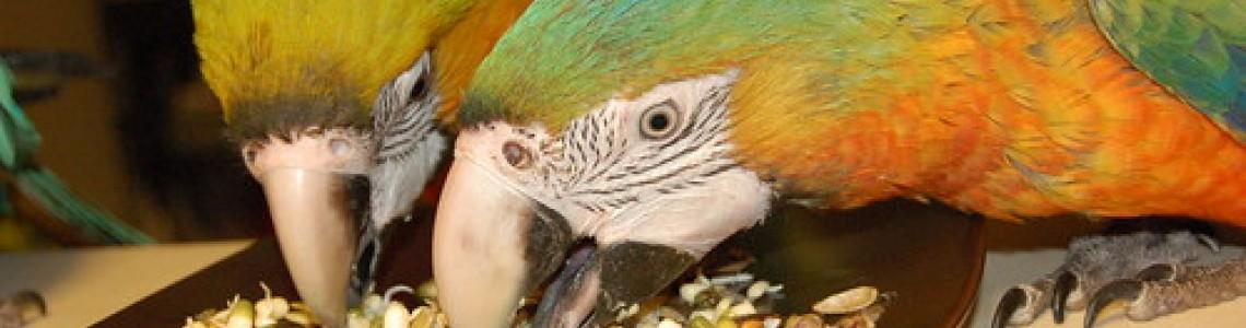 Защо кълновете са толкова хранителни? Какво представляват? Как да ги предложите на Вашият папагал?