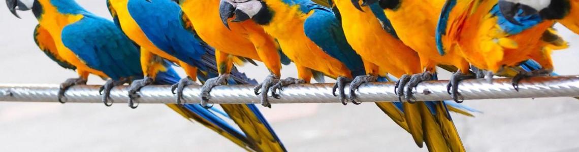 Видове папагали