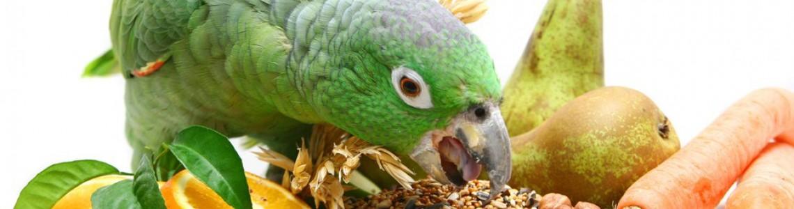Как да храня правилно папагала си?