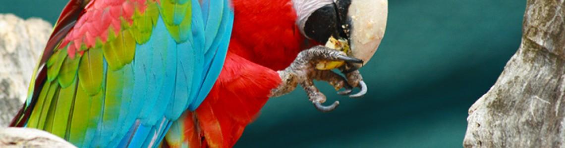 Хранене на папагали - 1 част.